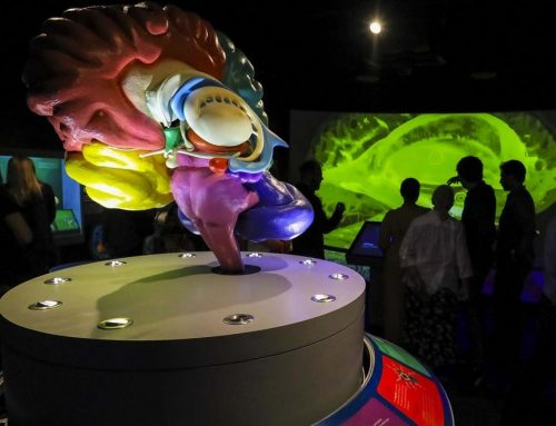 South Florida Science Center's upcoming sound show will soothe senses